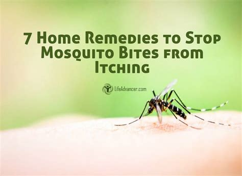 how to stop itching how to stop mosquito bites from itching with these home remedies