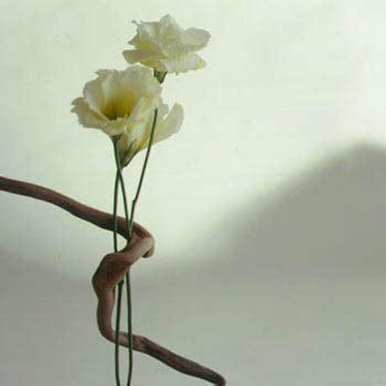 il fiore bianco fiore bianco homeimg it