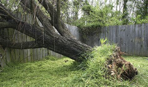 does house insurance cover tree damage does house insurance cover fences 28 images home insurance understanding what s