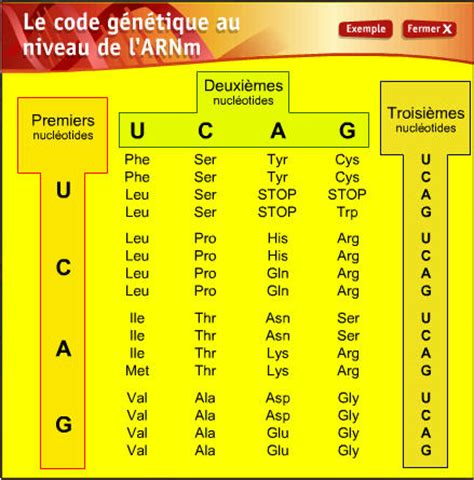 Genetic Code Table by Micro Discoveries Dna Rna Proteins What Are