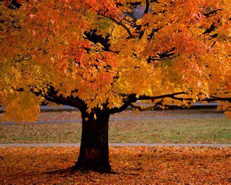 autumn seasons autumn season