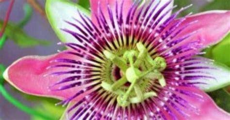 fiori simbologia il significato e la simbologia dei fiori dalla m alla z