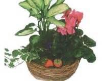saksi bitkilerinin bakimi uzmantv