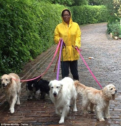 oprah s dogs 16 with golden retrievers right now