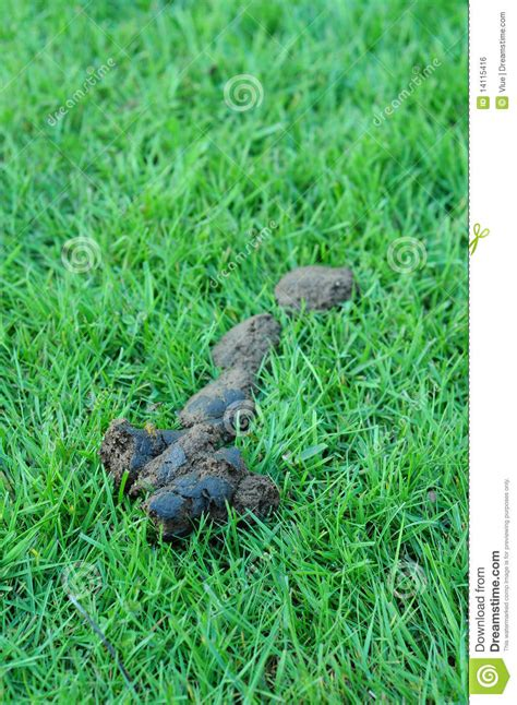 puppy green diarrhea on grass royalty free stock image image 14115416