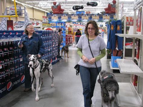 walmart puppy supplies cheap and simple ways to keep your dogs entertained
