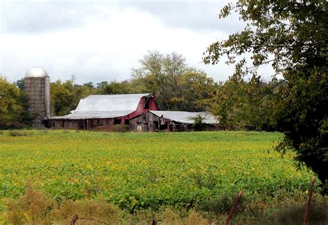 Shed Barns For Sale Barn Yard Gold Photograph Images Frompo