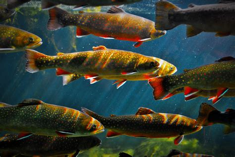 fische zum kaufen zierfische tipps zum kauf und transport