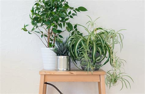 live indoor plants women who surround themselves with plants live longer