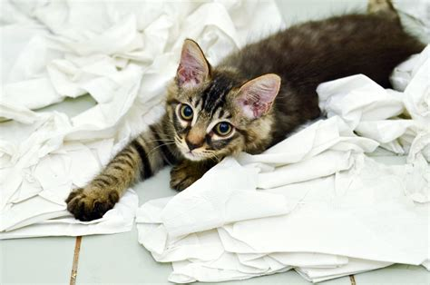 20 Cats Play With Toilet Paper Make You Laugh