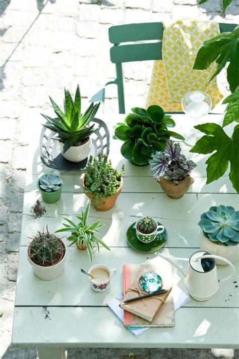 Schöne Pflegeleichte Zimmerpflanzen by Sch 246 Ne Zimmerpflanzen Bilder So K 246 Nnen Sie Ihre Wohnung