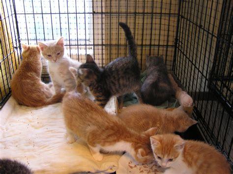 pet store that sells puppies ban dogs and cats from pet stores christie lagally