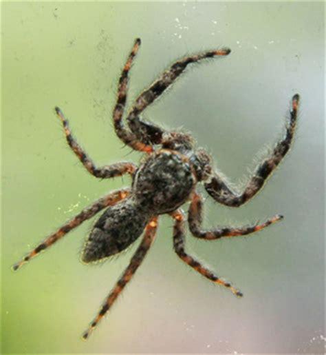 Garden Spider Folklore Garden Spiders Master Gardener Program