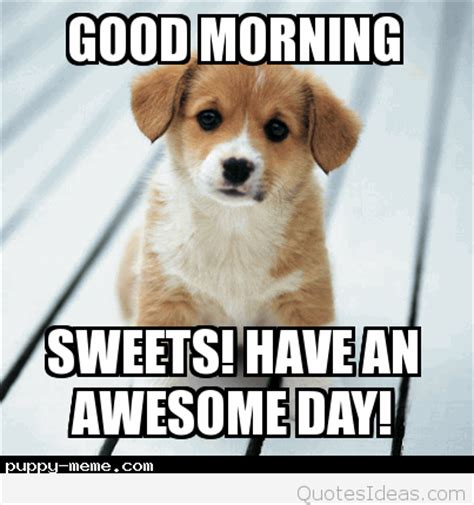 Goodmorning Meme - funny goodmorning monday dog picture with quote