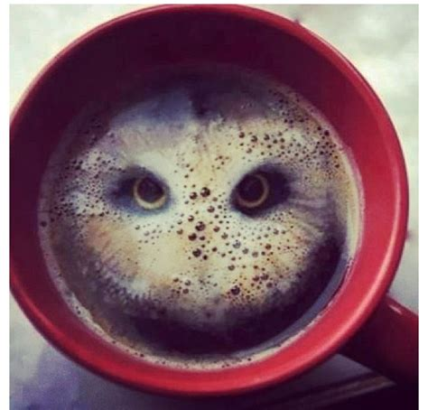 owl coffee new year