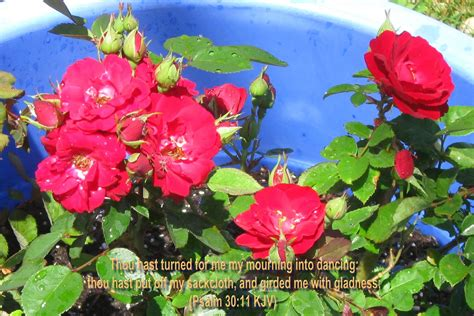summer flowers wallpaper beautiful desktop wallpapers 2014 summer flowers wallpaper beautiful desktop wallpapers 2014