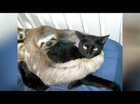 super weird cute animal friendships  bet