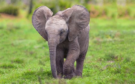 wallpaper 4k elephant elephant baby pictures free hd desktop wallpapers 4k hd