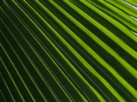 leaves pattern photography flower pattern pictures plant pattern photos gallery