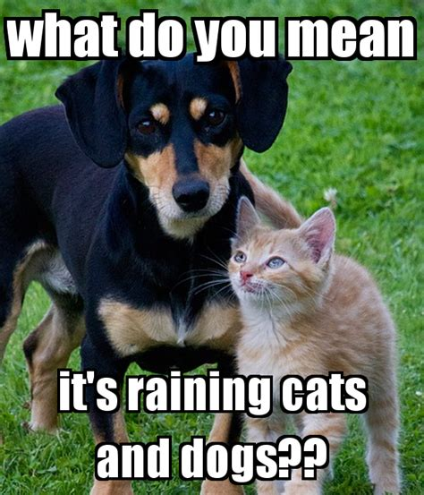 what does it when you about dogs what do you it s raining cats and dogs poster liv sta keep calm o matic