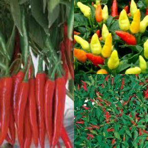 Pupuk Growmore Untuk Cabe jual benih cabe cur cabe merah cabe rawit merah
