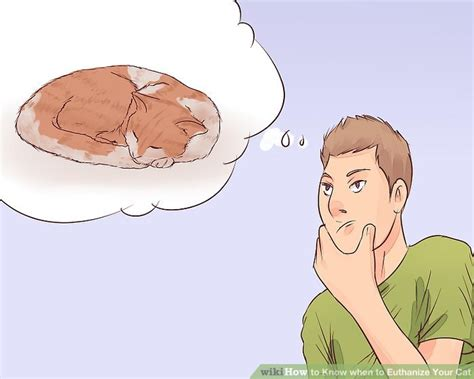how much to euthanize a how to when to euthanize your cat with pictures wikihow
