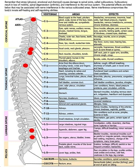 diagram of spine and nerves spine diagram spinal nerves effects chart to