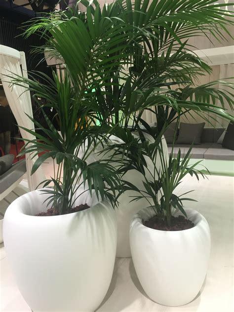 fresh ways  decorate  houseplants