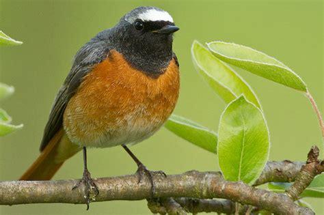 vögel im garten bestimmen wer flattert in meinem garten v 246 gel bestimmen nabu