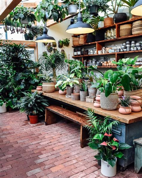 plant shops   attract  plant lover plants
