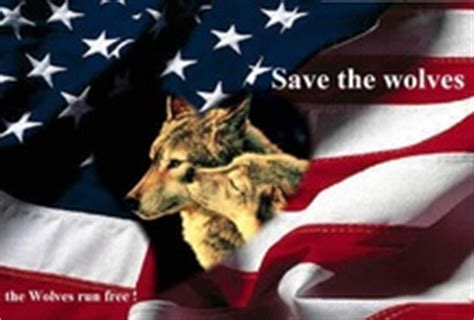 flags of the world julie ellis wolf howling in front of american flag wolves pinterest