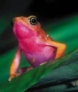 colorful frog colorful frog toadly froggy