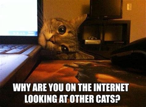 Cat Internet Meme - funny cats on the internet dump a day