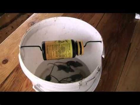 mousetrap homemade cara membuat jebakan tikus dirumah mouse traps butter and floors on pinterest