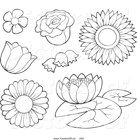 coloring pages of different types of flowers petal clipart sunflower outline pencil and in color