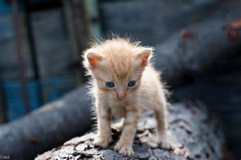 newborn kittens 18 adorable pictures of newborn kittens