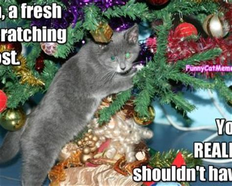 Cat Christmas Tree Meme - funny cat memes funniest cat memes for all ages