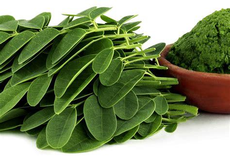 Teh Daun Kelor ini manfaat daun kelor yang baik untuk kesehatan tubuh kita manfaat sehat