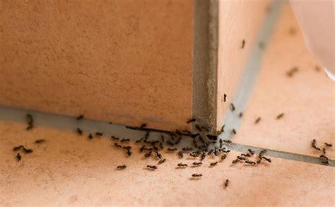 come eliminare un formicaio dal giardino eliminare le formiche da casa senza impazzire hton