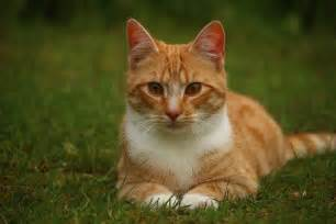 This guest post is from Leigh Marcos, a lover of all animals ... Cat