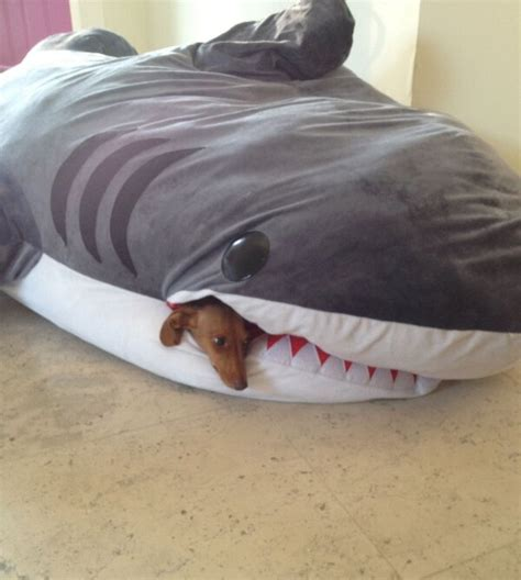 new things to try in bed a dachshund would surely de stuff this shark bait bed and