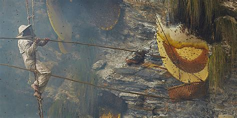 honey hunt a look inside the of a nepalese honey