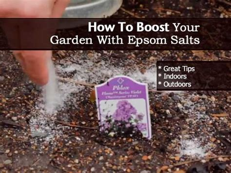 epsom salt in gardening tomatoes a myth by plantcaretoday