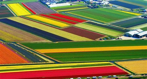 netherlands tulip fields tulip fields of netherlands glorious gardens