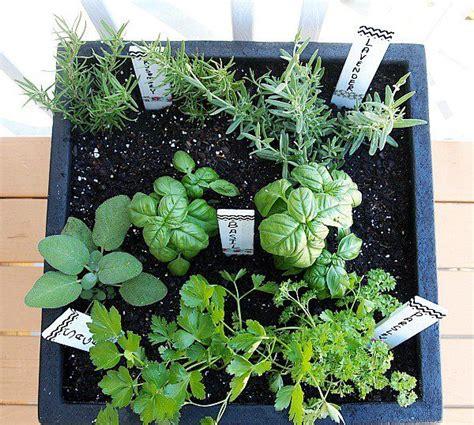 herb garden basics tips for planting a container herb garden gardens herbs