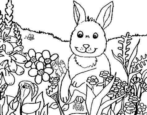 coloriage de lapin en cagne pour colorier