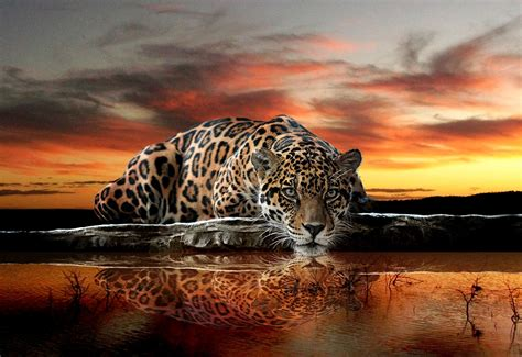 Star Wars Wall Murals Wallpaper wild cat jaguar wall murals for wall homewallmurals co uk