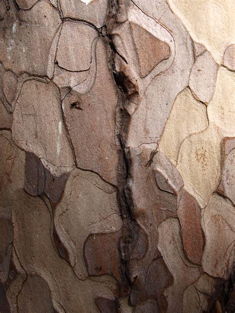 how to paint tree bark texture tree bark inspiration wood textures
