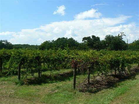irvin house vineyards irvin house vineyard photos wadmalaw island south carolina sc