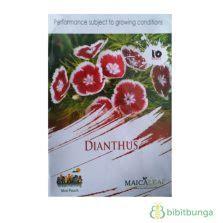 Benih Kangkung Bangkok Lp1 cara membuat tanaman hias mini indoor dan outdoor